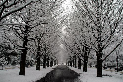 光が丘公園 / 今年も楽しい初雪