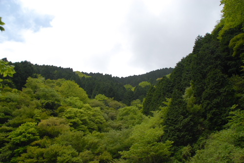 長尾峠 / 新緑あざやかな峠道