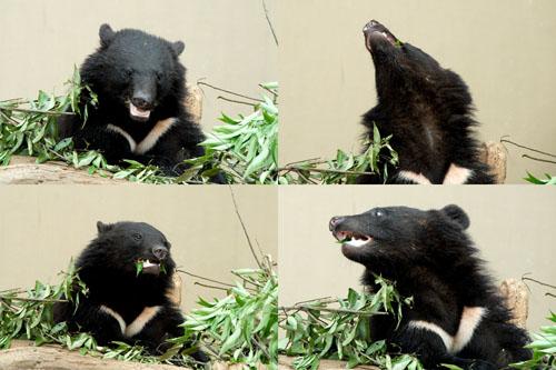 上野動物園 - クマたちの丘