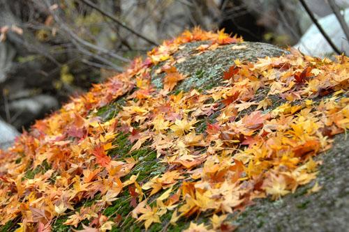 昇仙峡 / 紅葉した渓谷を歩く