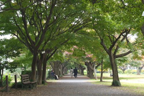 小石川植物園 / 草木が過ごした時間にふれる