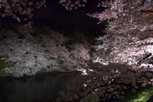 千鳥ヶ淵 / 闇に浮かぶ桜