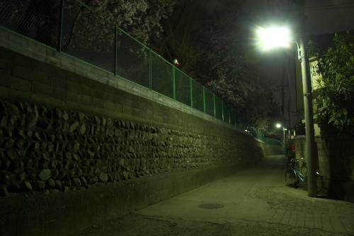 白子小の夜桜を見逃す