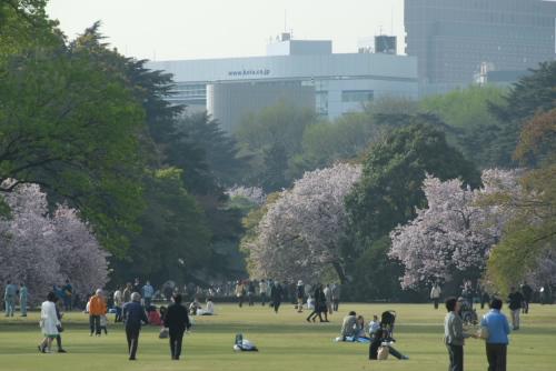 新宿御苑 / 遅咲きの桜たち