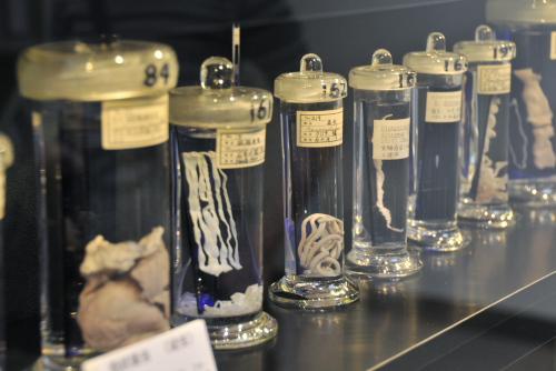 目黒寄生虫館 / 世界でただひとつの博物館