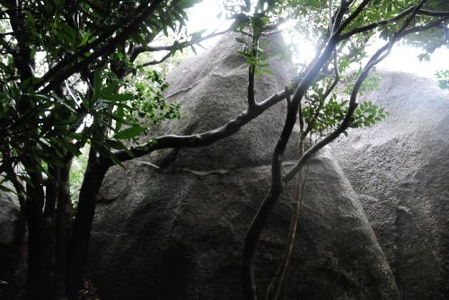 足摺スカイライン、唐人駄場園地、巨石群