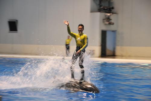 海の動物たちのショー / その身体能力に驚く