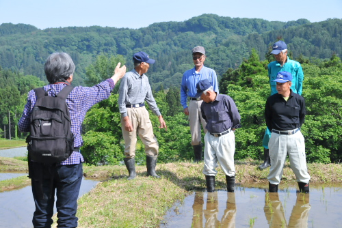 夏の吉川出張(1/4) 健菜コシヒカリのふるさと、吉川へ