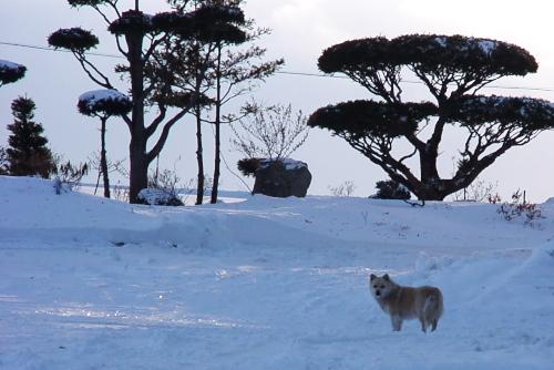 北海道の犬