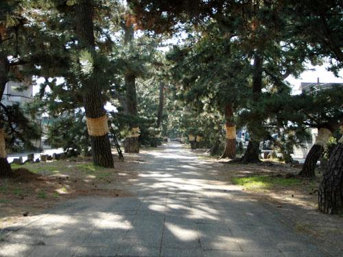 三保の松原に抜ける道