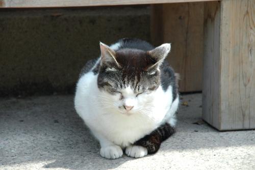 まぶしそうな猫