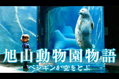 Penguins in the sky - Asahiyama zoo