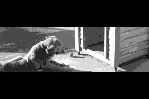 第29夜:台風と犬小屋