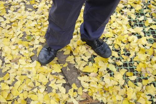 光が丘公園 / 2001年の紅葉
