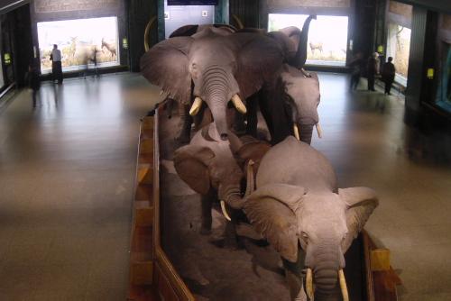 アメリカ自然史博物館で興奮する