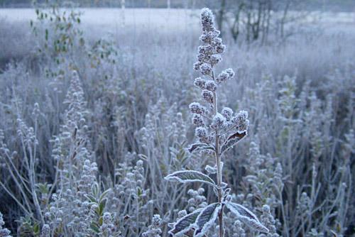 戦場ヶ原 / 美しく凍り付いた朝