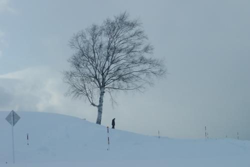 美瑛の丘を越えて