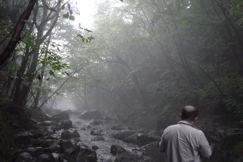 乙女の滝 / 霧けむる渓流