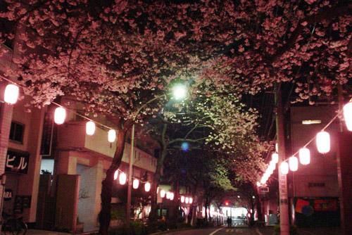ぶらり大塚の夜桜