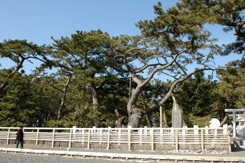 三保の松原 / 原風景のような浜辺