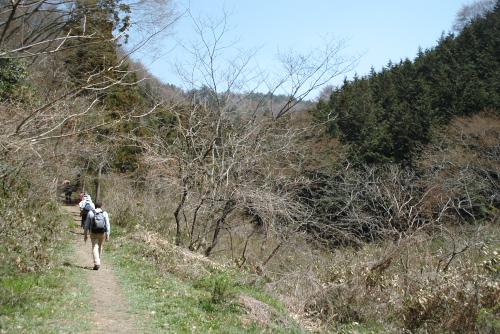 [ウォーキング] 「あしがくぼ山の花道・カタクリ」を訪ねて