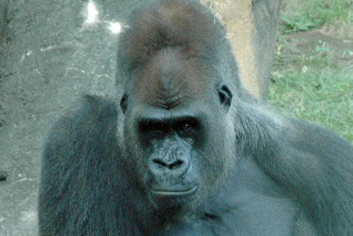 恩賜上野動物園 / たまには動物園へ