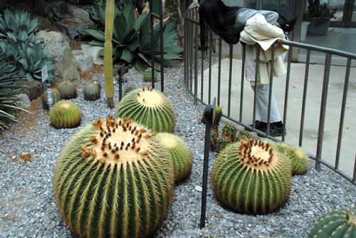 つくば植物園 / 冬の植物園もいいな