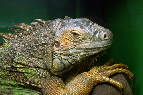 上野動物園 - 両生爬虫類館