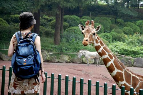 多摩動物公園 / キリンさん、ペリカンさん