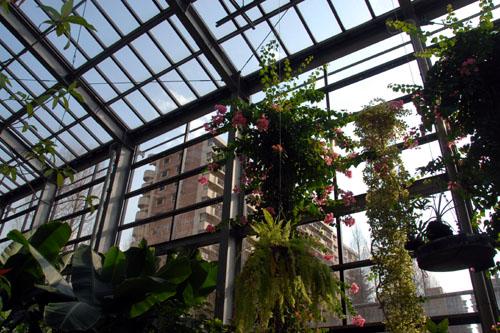 光が丘温室植物園 / 団地の中の温室