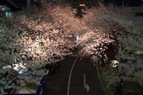 赤坂アークヒルズ / 都市の夜桜