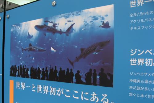 ハイビジョン沖縄美ら海水族館 / 本物に勝てるか