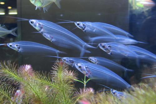 板橋区立熱帯環境植物館 / 団地の中の温室
