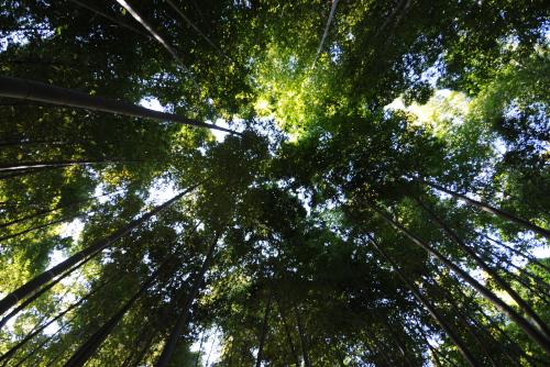報国寺の竹林にひたる