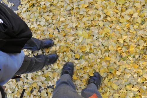 光が丘公園 / 2008年の落葉