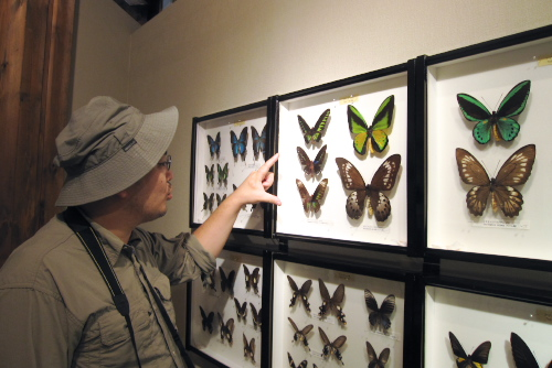 サンクチュアリセンター つきだて館(昆虫館) / 昆虫でかい